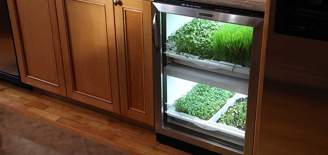 Kitchen-Herb-Garden-with-kitchen-cabinets