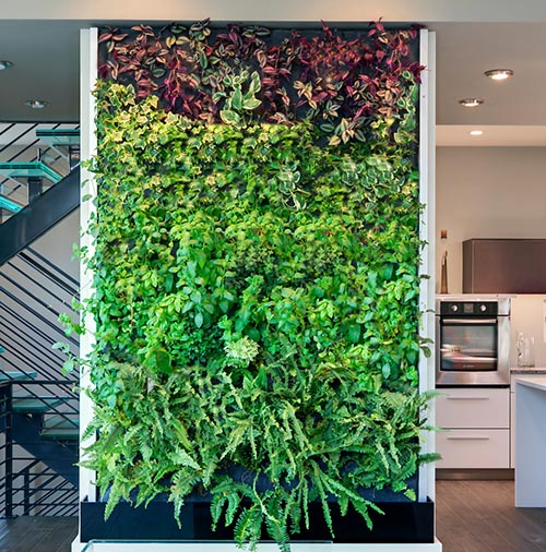 living-wall-in-kitchen