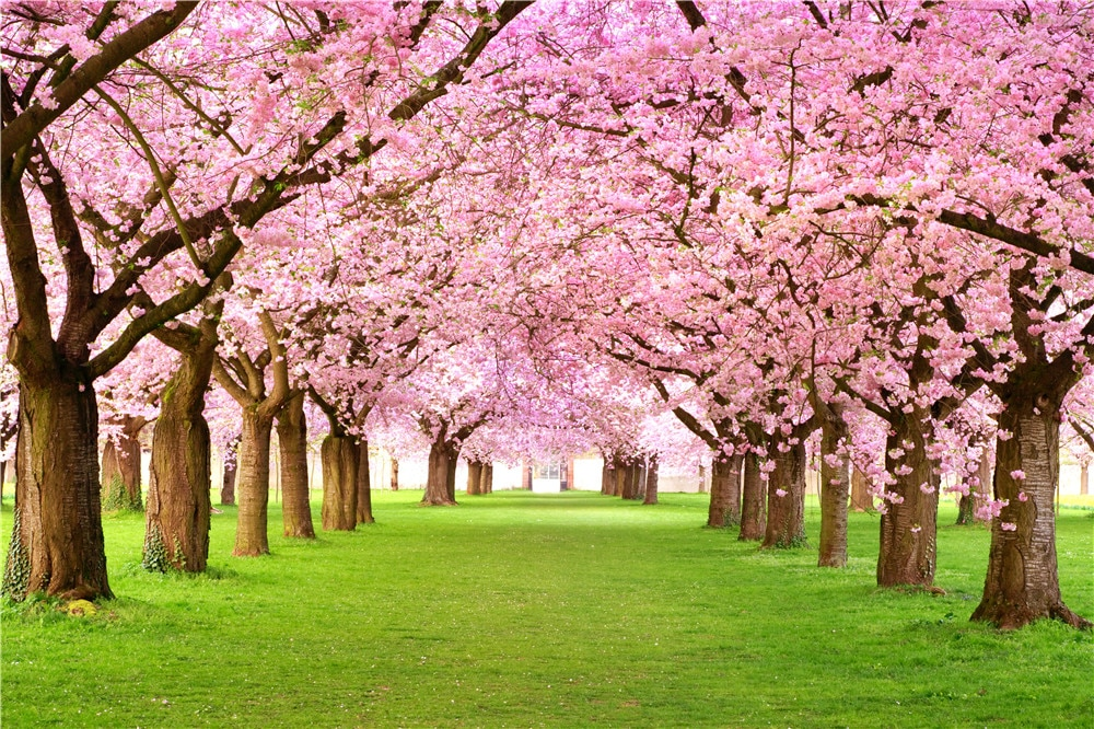 Pink-Cherry-Blossom-Trees-Wedding-Floral-Backdrops-Photography-Spring-Flowers-Green-Grass-Nature-Scenic-Kids-Photo