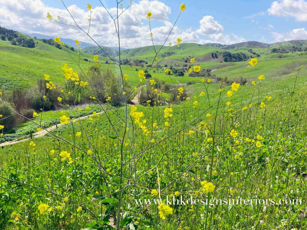 spring bloom in Chino Hill State Park 2021