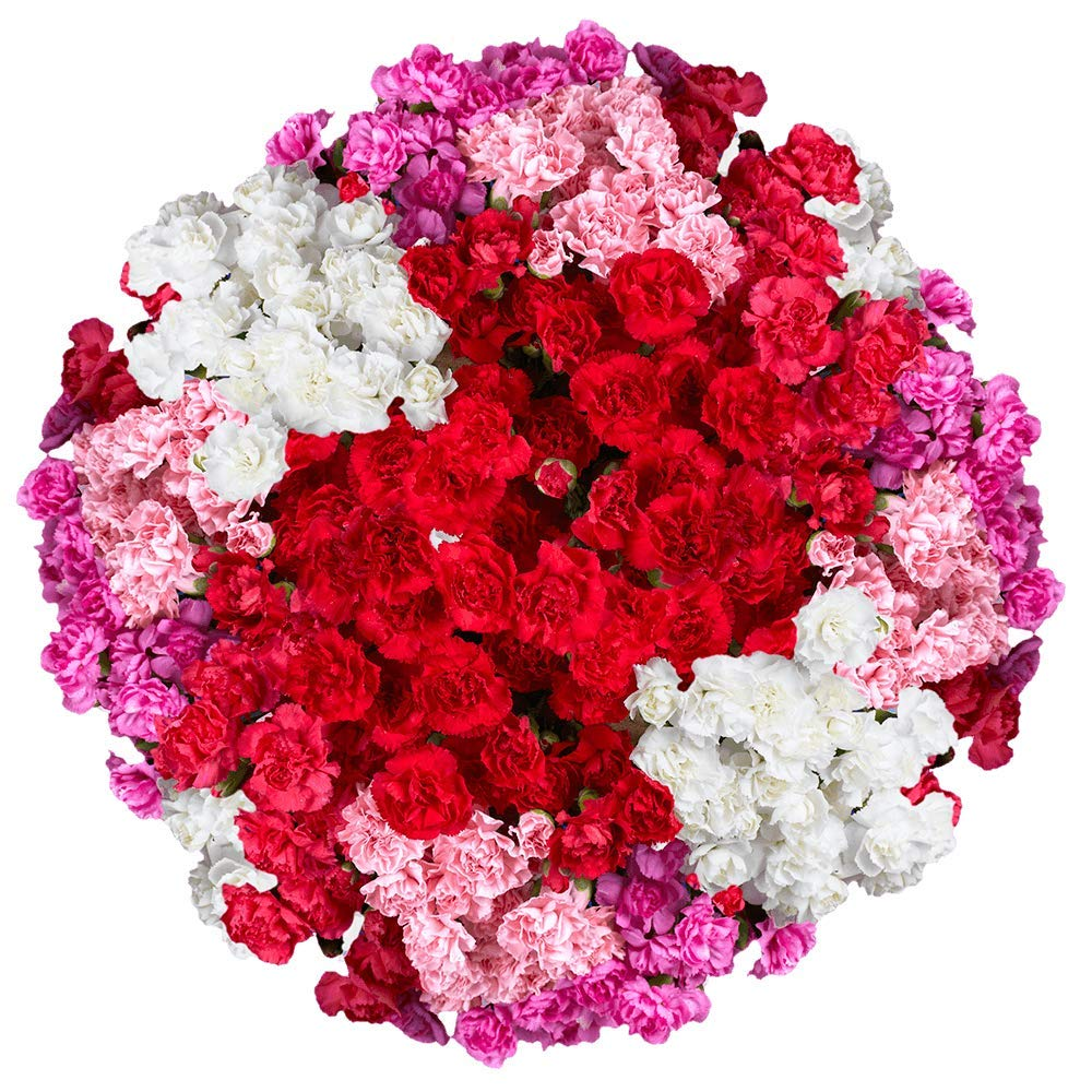 GlobalRose 160 Fresh Cut Spray Carnations for Mother's Day Fresh Flowers Express Delivery - Perfect For Mother´s Day